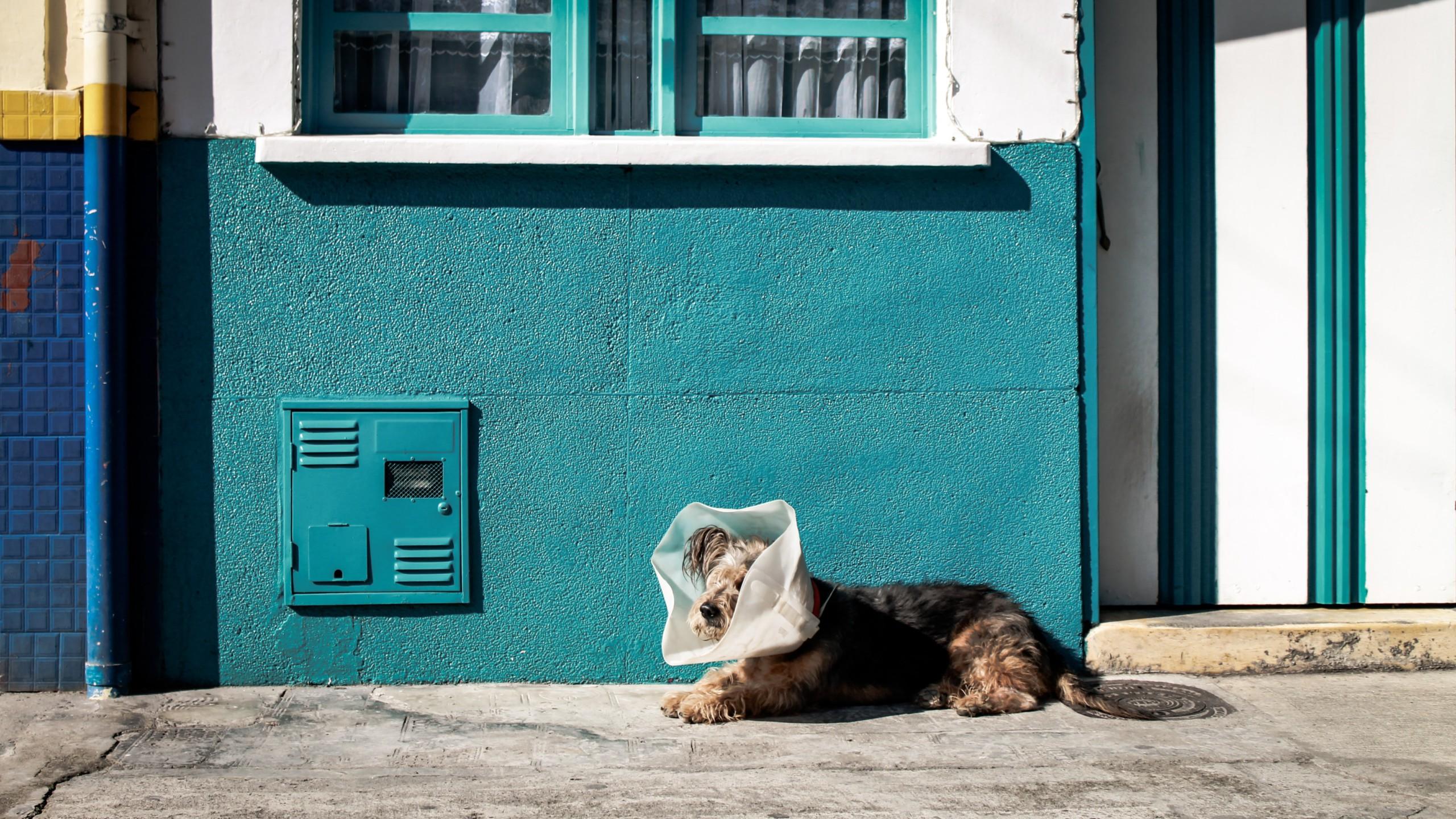 image of dog on street